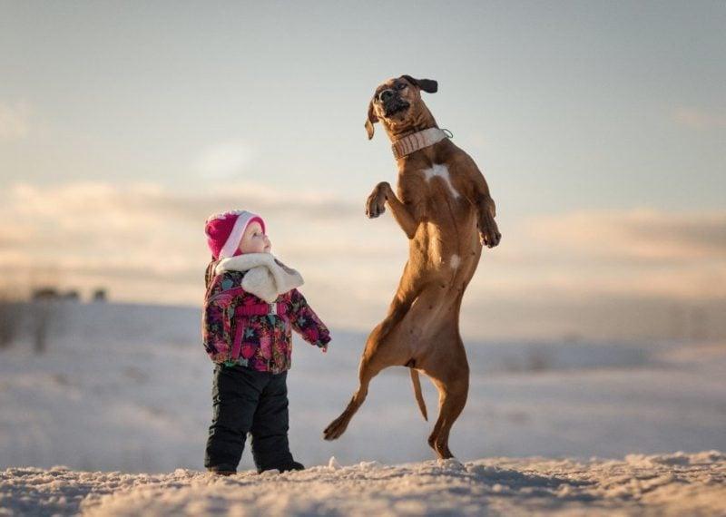 welcher Hund passt zu mir Martin Rütter