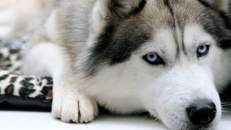 Hunderassen für Anfänger und Familie