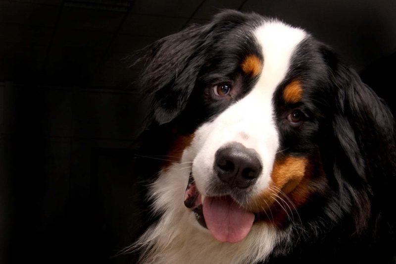 Haushund Rassen