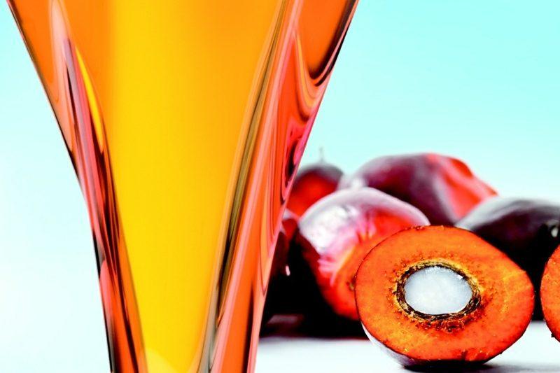 Palmöl gesund interessante fakten