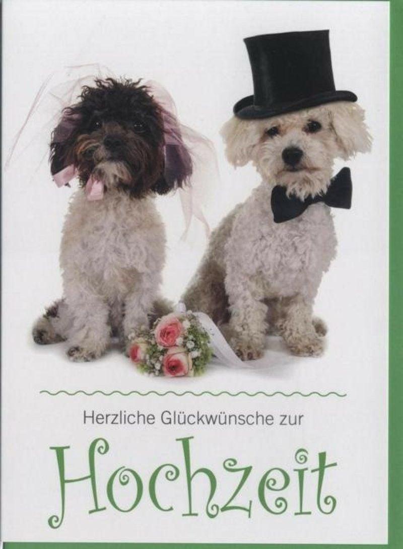 beste Sprüche Hochzeit lustig