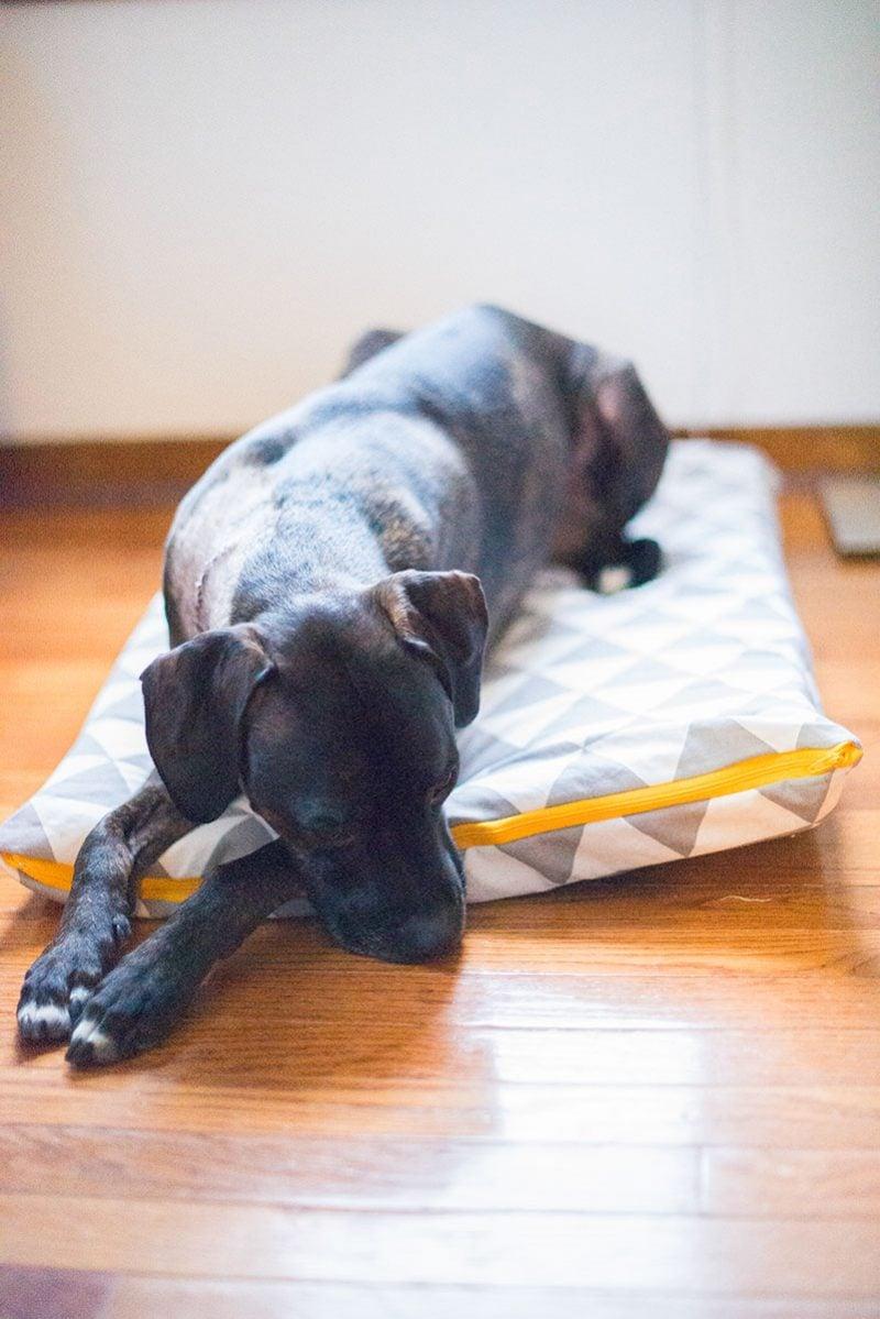 Geschenke nähen - Hundekissen