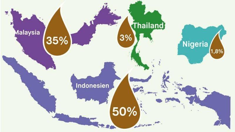 Palmöl gesund Palmölherstellung in der Welt