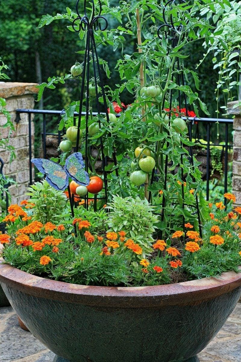Gemüse anbauen Tomater grosser Blumentopf