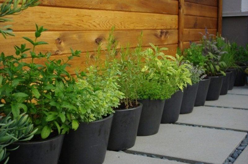 Gemüse anbauen auf dem balkon welche sind die passenden Sorten