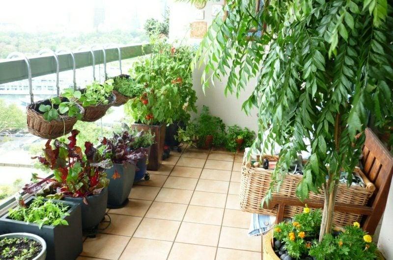 Gemüse anbauen Balkongarten anlegen