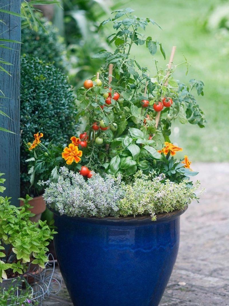 Gemüse anbauen im Blumentopf Ideen und Inspirationen