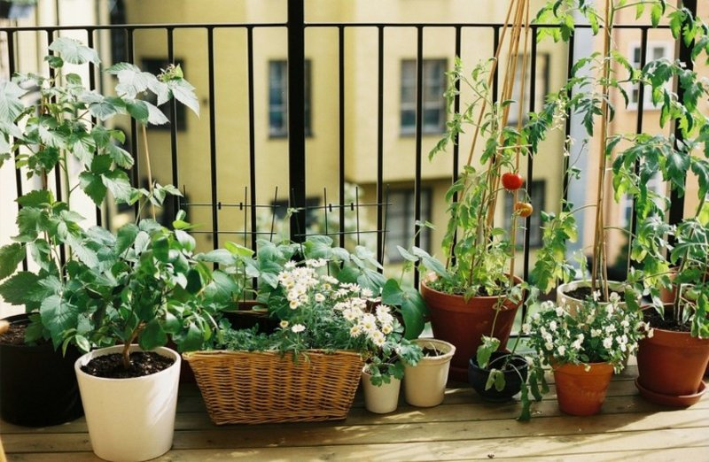 Gemüse anbauen auf dem Balkon kreative Ideen