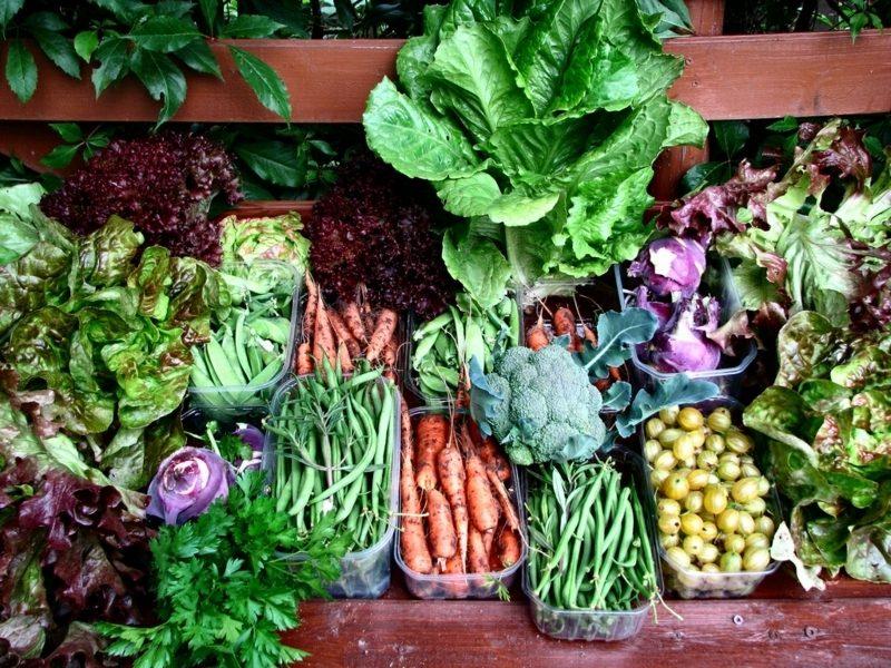 Gemüse anbauen auf dem Balkon passende Sorten