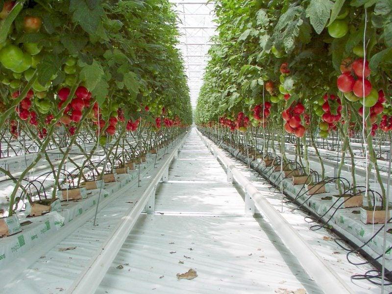 DIY Ideen Garten Gewächshaus selber bauen