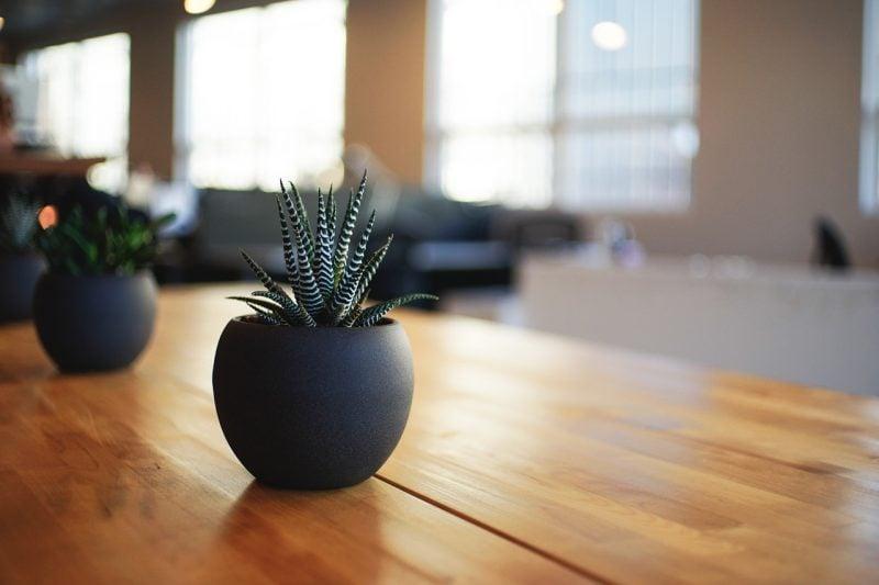 Das neue Must-have: Pflanzen!