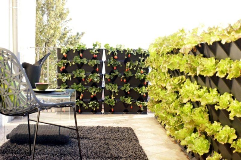 Gemüse anbauen vertikaler Garten auf dem Balkon