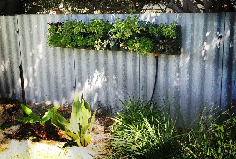 bewässerung vertikaler garten