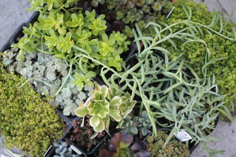 pflanzen auswählen vertikaler garten