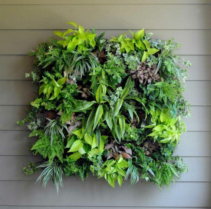 vertikaler garten immergrüne pflanzen