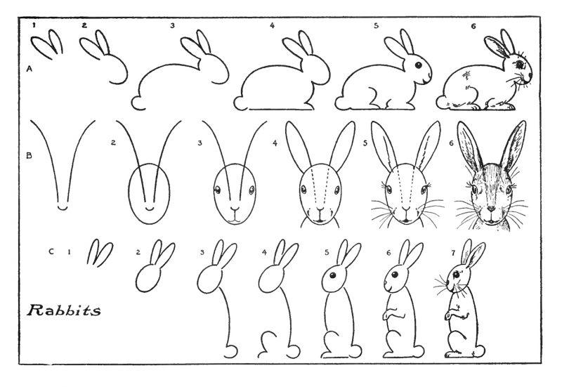 Zeichnen lernen Tiere zeichnen