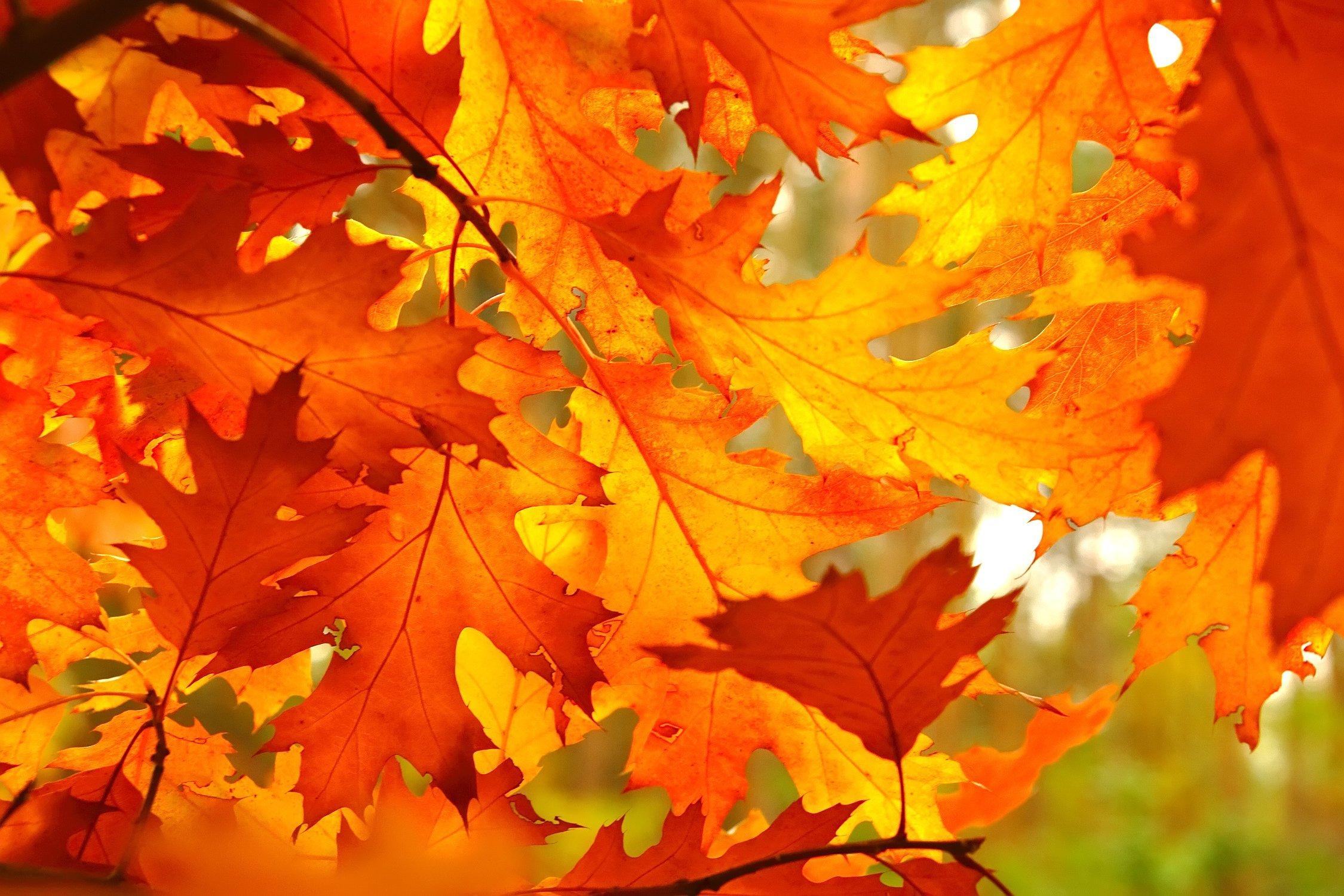Herbstblätter - Feuer pur