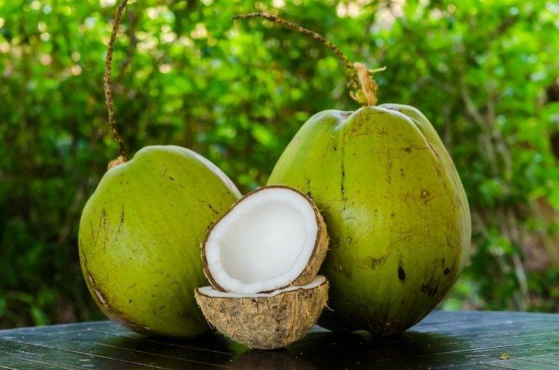 Kokosmilch gesund Trendgetränk