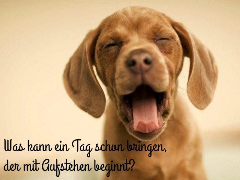 guten Morgen Bilder witzig Hund