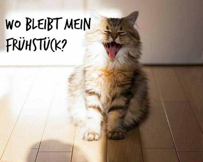 witzige guten Morgen Bilder Katze