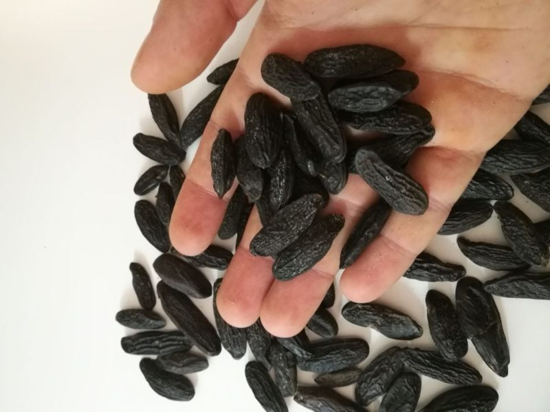 Tongabohne Anwendunf und Inhaltsstoffe