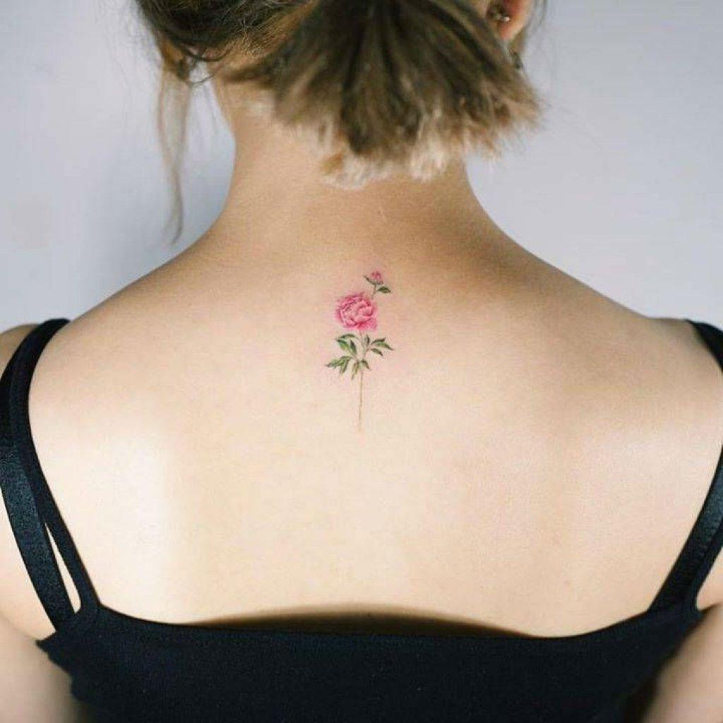 schlicht bunte Rose