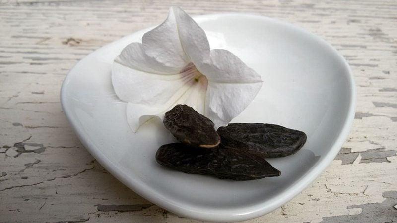 Tonkabohne Tongabohne Inhaltsstoffe und Wirkung