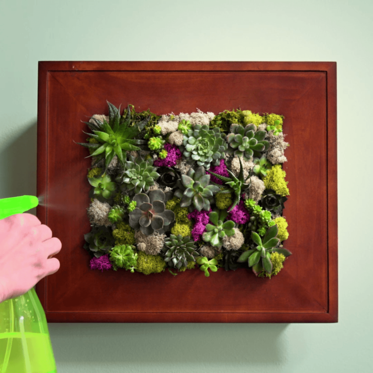 Wie gießen Sie die Blumen in einem Bilderrahmentopf?