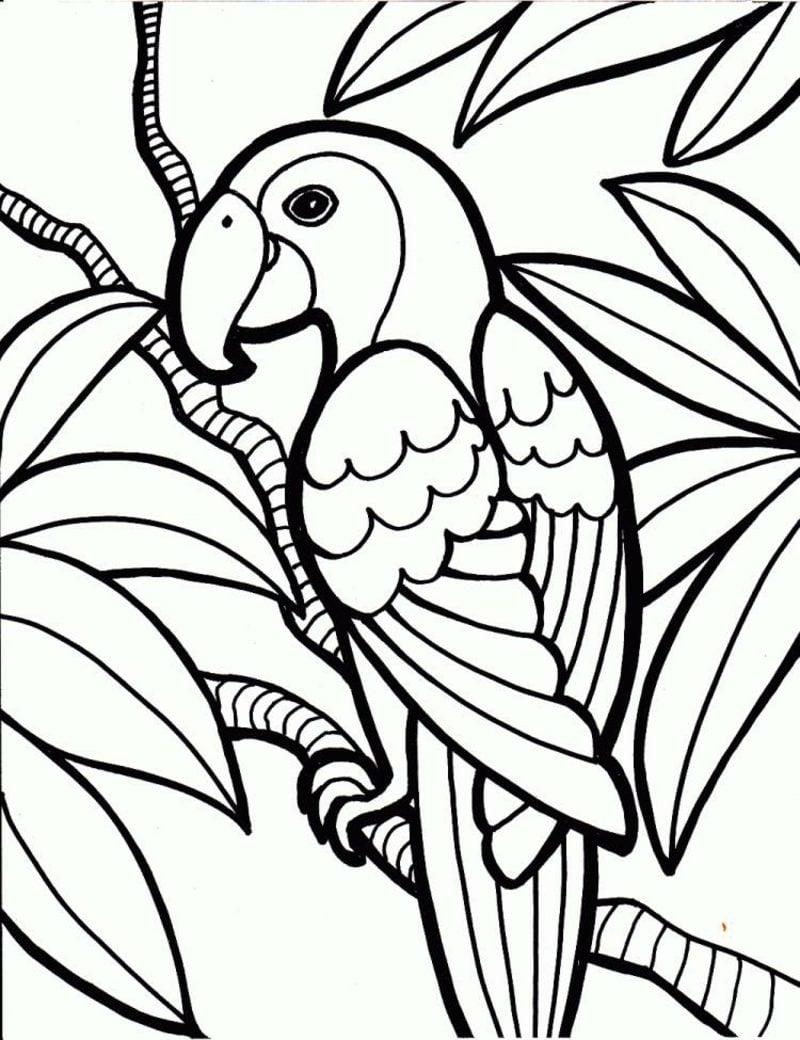 Bilder zum Ausmalen Papagei