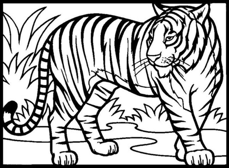 tolle Ausmalbilder kostenlos Tiger