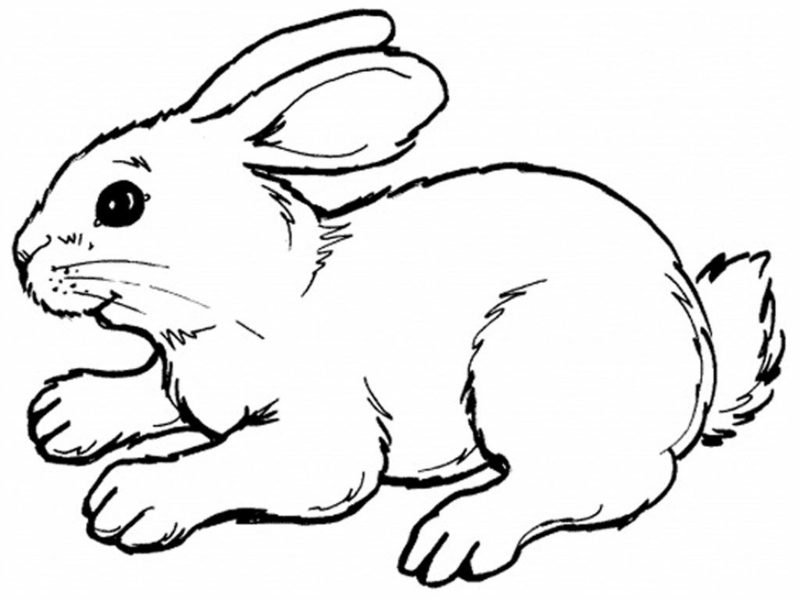 Ausmalbilder für Kinder Hase