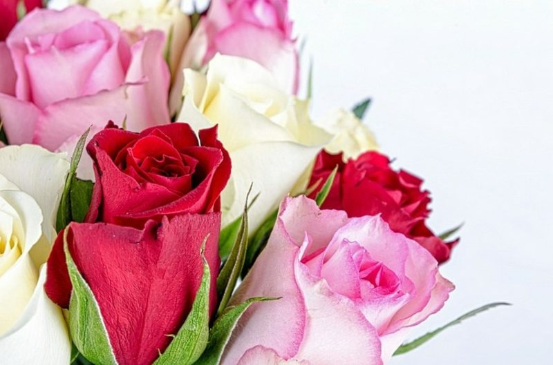Blumenarten Rosen Bedeutung Valentinstag