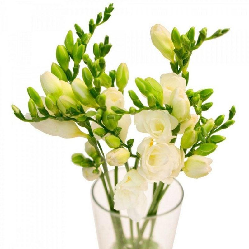 Blumenarten Freesien zum Valentinstag schenken