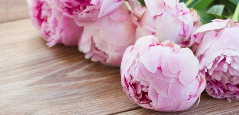 Blumenarten Pfingstrosen Bedeutung