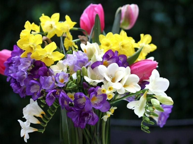 Blumenarten Valentinstag zarte Freesien
