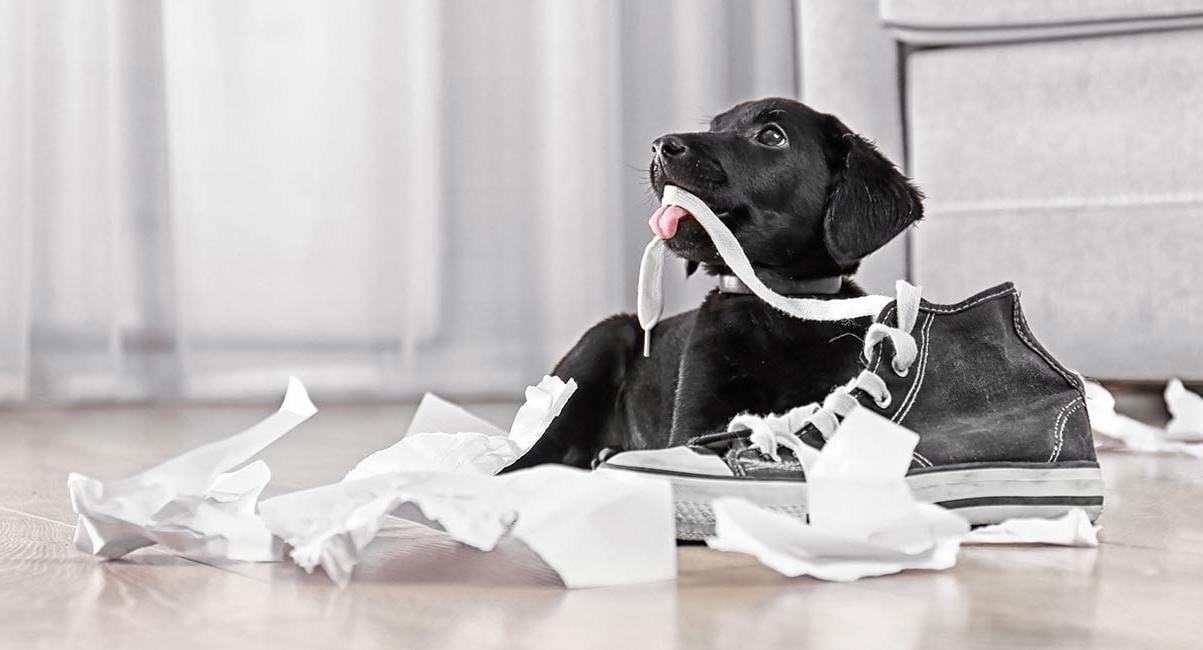 Hunde Kauartikel für ein Kauerlebnis