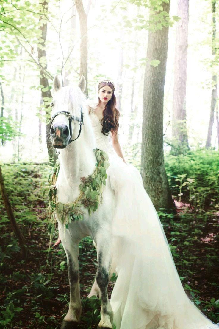 Schöne Pferde Bilder mit Braut