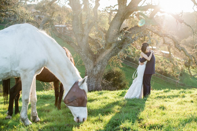 Schöne Pferdebilder für die besten Hochzeitsfotos