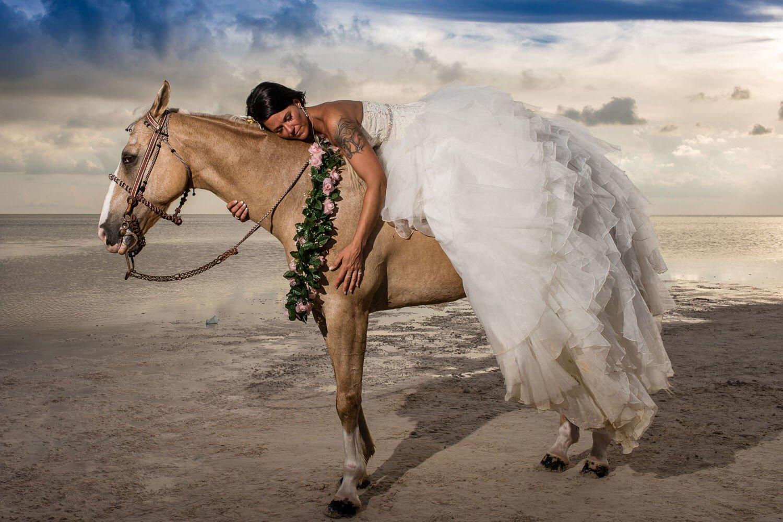 Das beste Pferdebild ist dieses mit einem Braut!