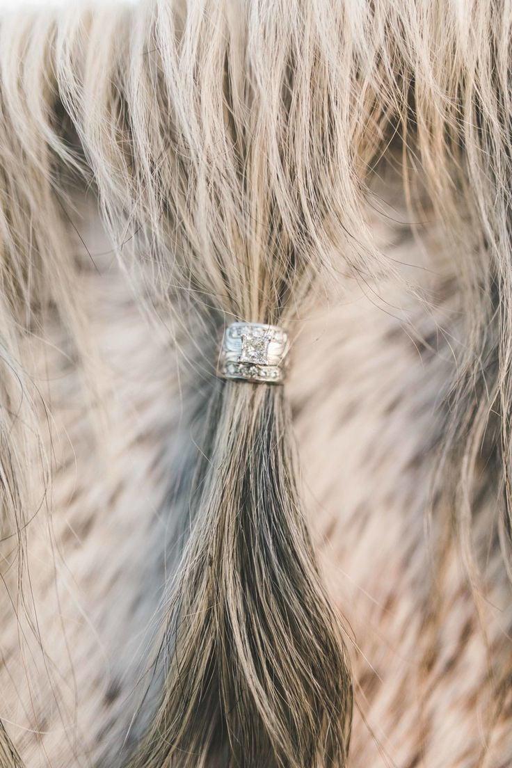 Hochzeitsringe auf Pferd fotografieren - schöne Pferdebilder