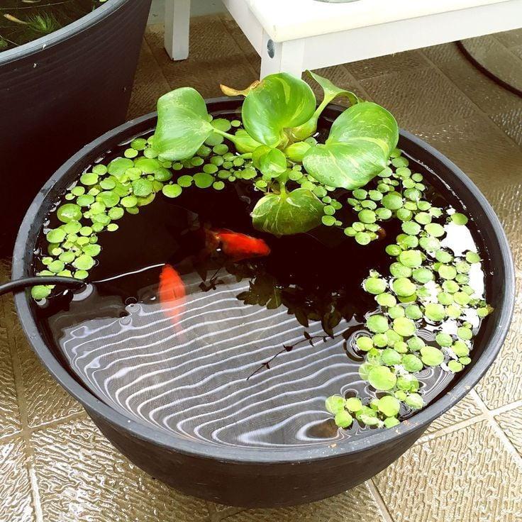 Tolle Gartenideen für wenig Geld - Mini-Teich mit Fischen