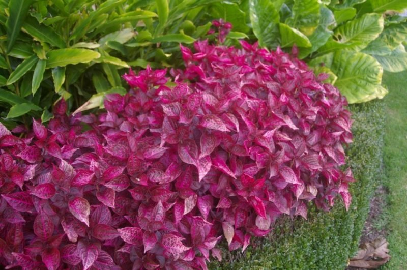 Vorgarten gestalten Pflanzen tolle Ideen