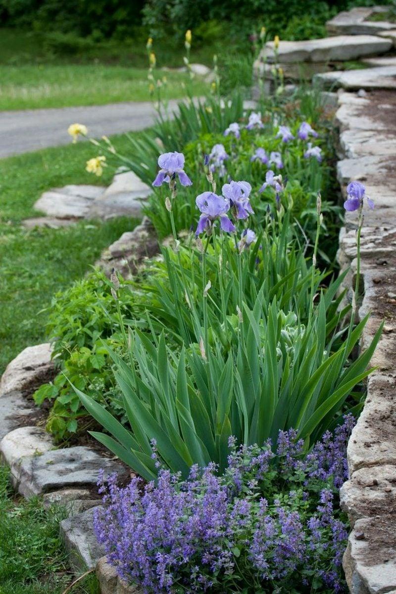 Vorgarten gestalten Blumen Irisen