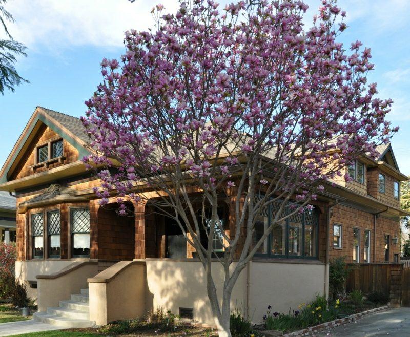 Vorgarten gestalten Pflanzen Kirschbaum