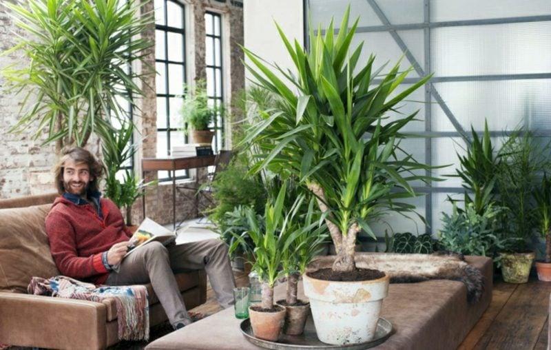 Palmenarten Palmlilie Yucca