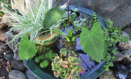 DIY Anleitung fürs Mini-Teich Anlegen - Sie können unsere Balkon Ideen selber machen, sogar wenn die Gartenanlage nicht vorhanden ist oder die Voraussetzungen für einen Biotop nicht gegeben sind.