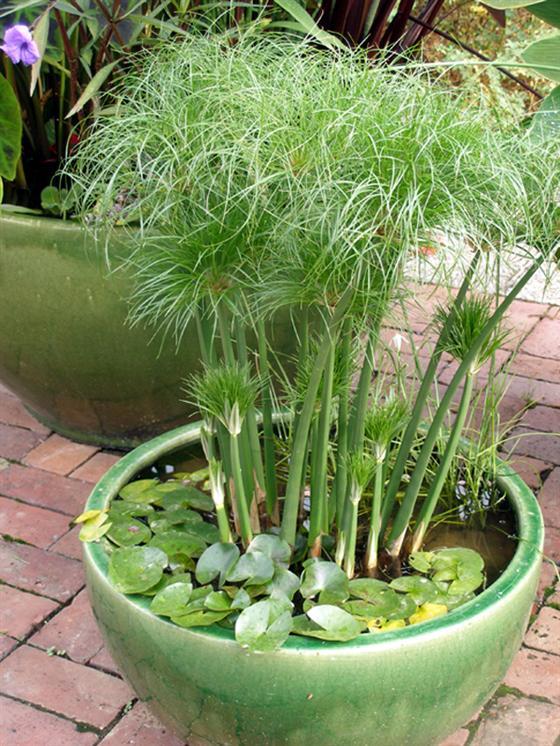 Tolle Gartenideen für wenig Geld - Mini-Teich im Topf