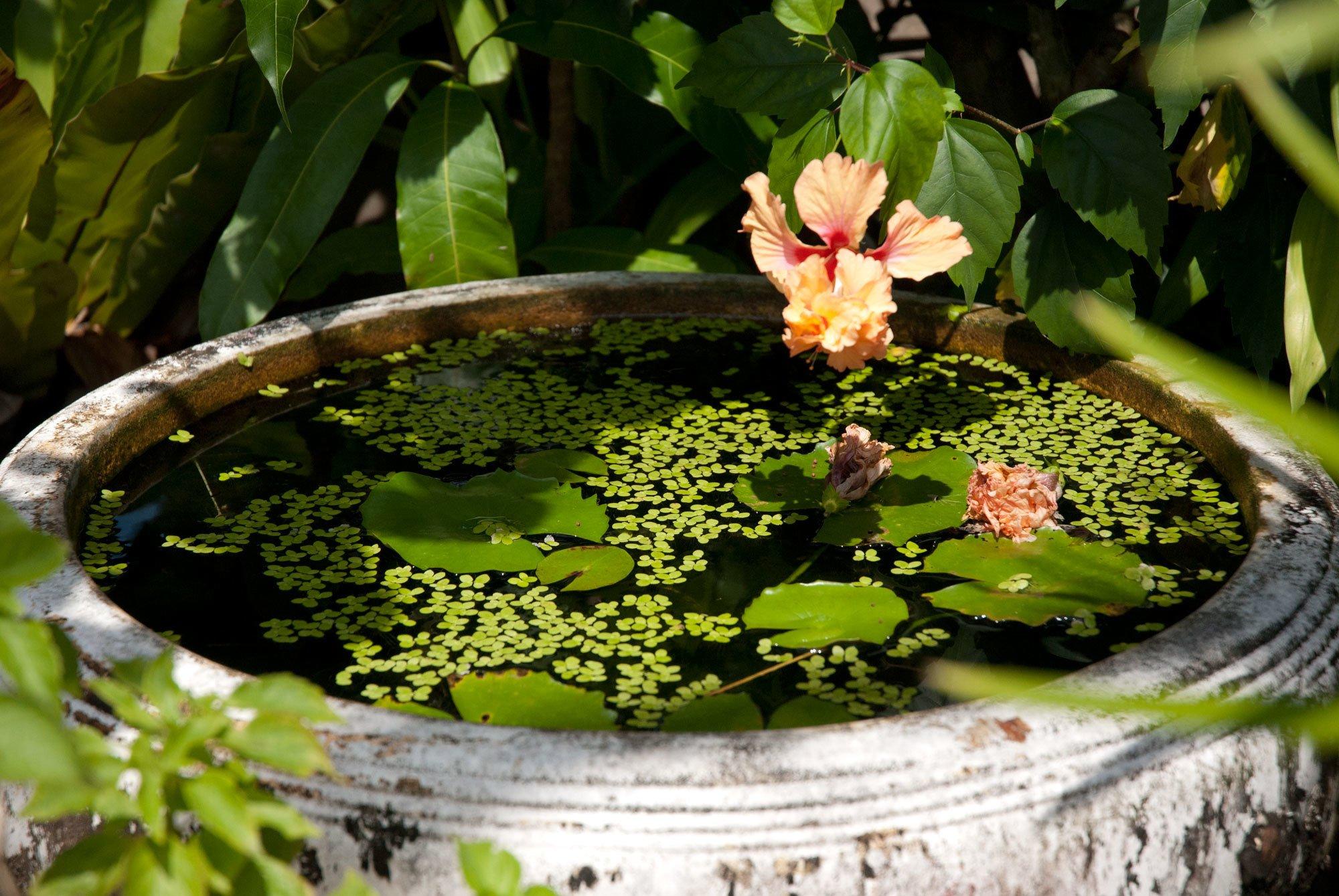 DIY Mini-Teich im Topf und noch viele tolle Gartenideen für wenig Geld finden Sie in unserem Artikel