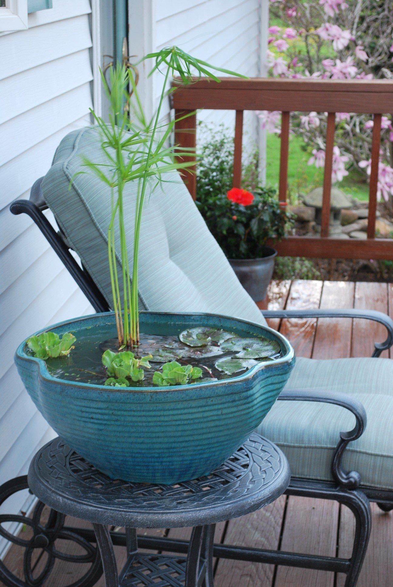 DIY Mini-Teich im Topf: Schritt für Schritt