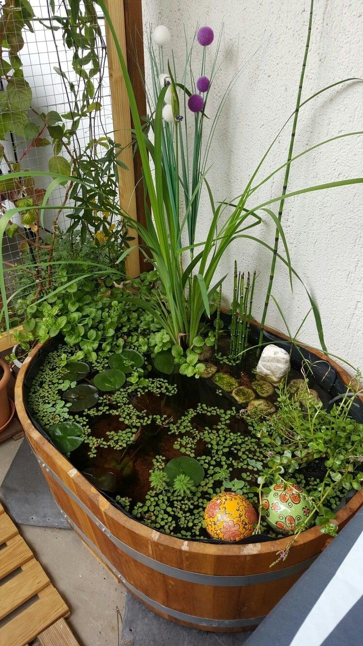 Balkonideen zum selber Machen: Mini-Teich im Topf
